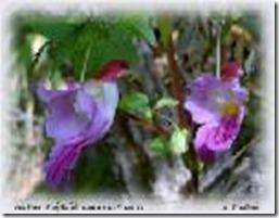 parrotflower2