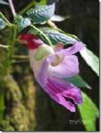 parrotflower3